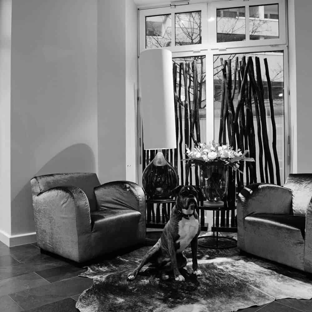 chwarzweiß Foto von einem Hund auf einem Kuhfellteppich in Mira und Marcus Friseursalon im Erdgeschoss des Louisa's Place