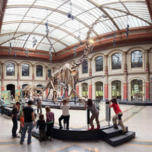 Foto aus dem Naturkundemuseum Berlin unweit des Louisa's Place Hotels am Kudamm